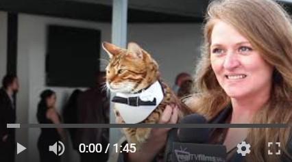 Kayla-Tabish-Surfer-Cat-Mav